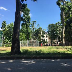 外出制限の解除後、公園の風景に欠けているもの