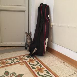 イタリア、第二波の兆しと猫との日常