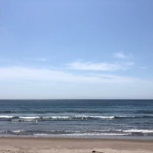 散歩に誘うテツと海