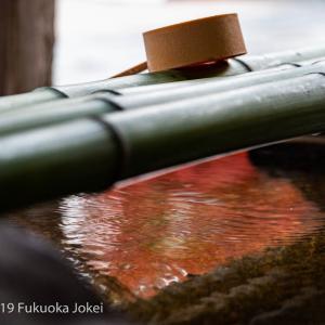 福岡市内 紅葉の季節 2019 その1 古刹での撮影