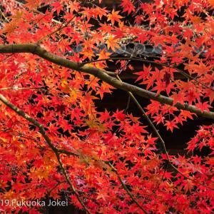 福岡市内 紅葉の季節 2019 その3 古刹での撮影