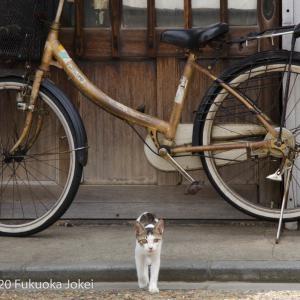 自転車スナップ写真 その2 昭和レトロ編