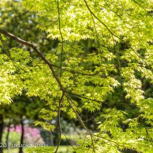 大宰府 新緑の風景写真