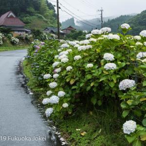 福岡花写真 6月 あじさいのある風景