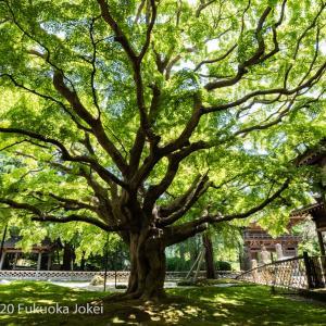糸島風景写真 緑の雷山千如寺大悲王院を訪ねて