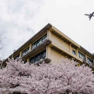 福岡レトロ写真 ノスタルジックな九州大学箱崎キャンパス 2016-2017