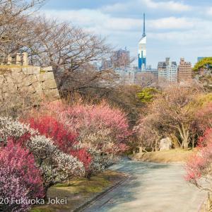 福岡 舞鶴公園 花のある風景