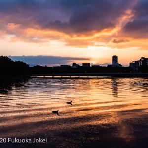 福岡情景 大濠公園 秋の夕景 その3