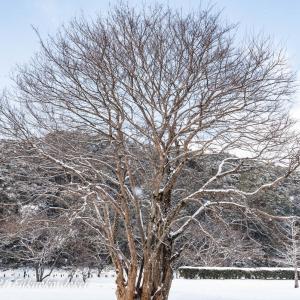 福岡風景写真 雪の大宰府政庁跡 2021