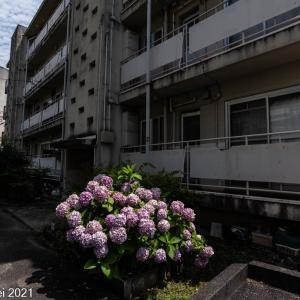 福岡情景 小笹団地 レトロ ノスタルジック エモ 現役の昭和風景 下編