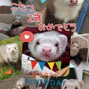 小龍の誕生日♪