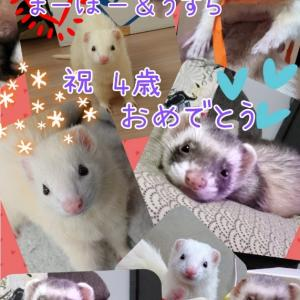 まーぼー&うずらの誕生日♪