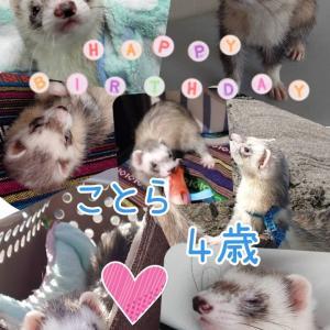 小虎の誕生日♪