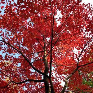 天平山に紅葉狩りに行く2020