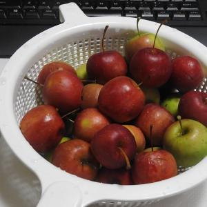 ミント 又また リンゴを食す