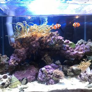 海水水槽にも稚貝って発生するの?