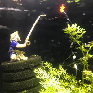 ピグミーマッシュルームの植え方 水草を効率よく育てよう