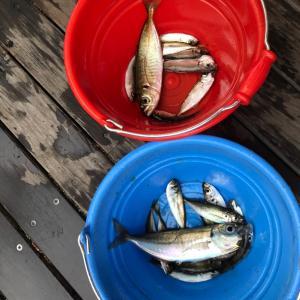 城崎マリンワールド 水族館にまさかの釣り堀!しかも食べれます