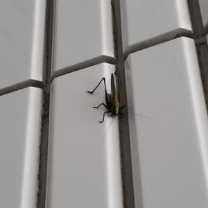 変な虫…見つけた~!