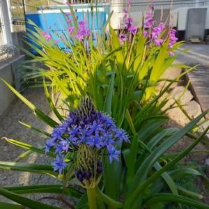 庭の花part4!