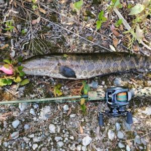 鯰レンジャーで色々な釣りに挑戦