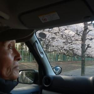 お花見ドライブ♪