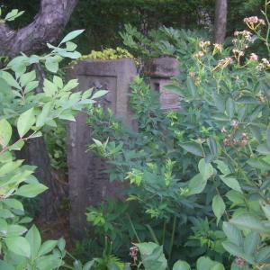 後醍院真柱(ごだいいんまはしら)誕生地碑