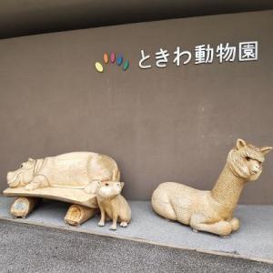 〝ときわ動物園〟へ吟行です!