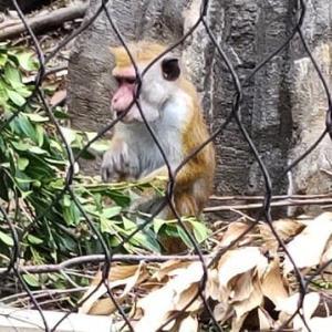 〝ときわ動物園〟のお猿さんたち