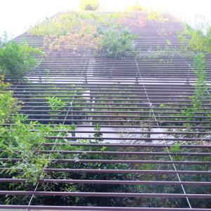 有名建築家が設計した都内の「お寺」建築まとめ【東京】