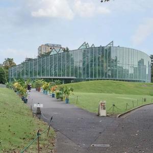 新宿御苑の大温室がスゴイ!建築好きがその魅力をレポート【東京新宿】