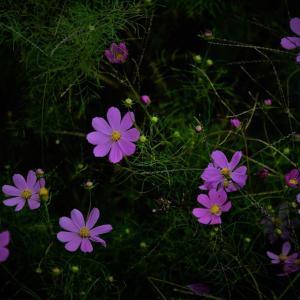 秋のお花。