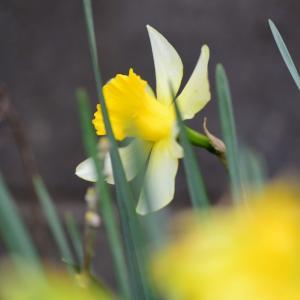 お庭のお花。