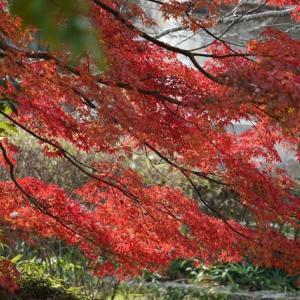 紅葉が綺麗でした!