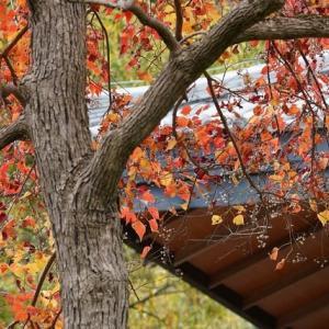 本日の公園の紅葉