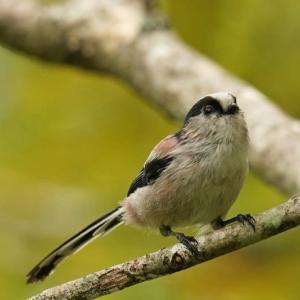 公園の小鳥達