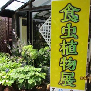 Go to  食虫植物展 in Himeji その1