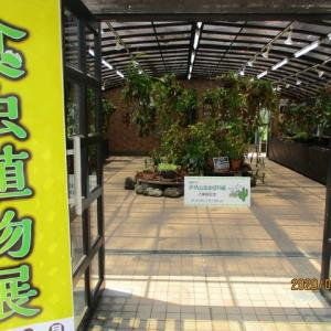 Go to 食虫植物展 in Himeji その2