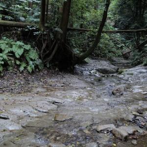 陣ケ下渓谷を子供と訪れて。横浜駅から30-40分で行ける渓谷。