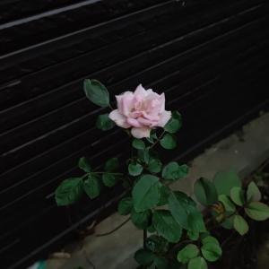 植物も家族【ミミエデンを育てる】