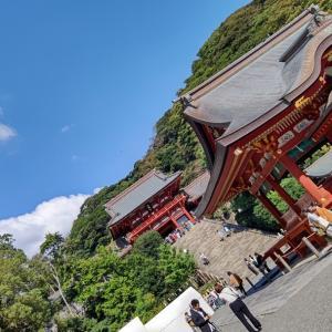 鶴岡八幡宮の神様に会いたくて