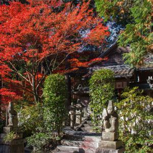 謎の歌人・猿丸太夫の正体とは⑳ 最終回 紅葉は楓ではなく萩だった。