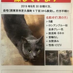 【拡散希望】西東京市で迷子猫さがしています!