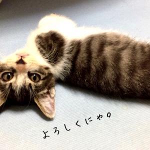 【当会の猫をお迎えくださった方へ】写真ご提供のお願い!