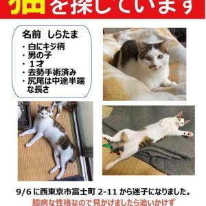 迷子猫を探しています!
