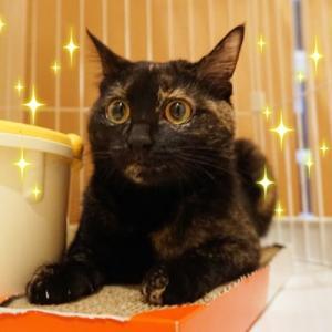 9月20日参加予定の猫ちゃんを紹介します!