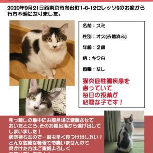 【緊急案件】IBD疾患の迷子猫ちゃんを探しています