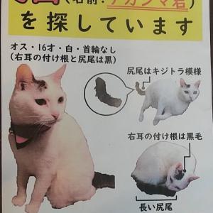 迷子猫を探しています