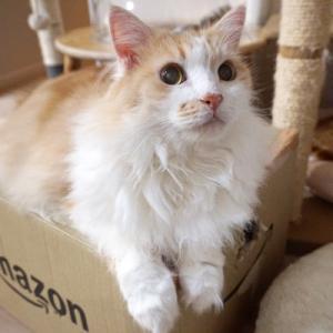 【8/22の譲渡会】参加予定猫ちゃんの紹介 その3