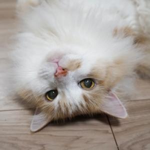 ケージに閉じ込められて汚物まみれになった猫(6)~譲渡会に参加しました~